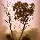 Foggy Morning Glow by Lozzar Landscape