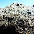 A Makeshift Mountain Of Rocks! by DCLehnsherr
