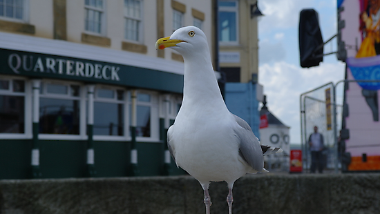 The Happy Seagull by Rob Page