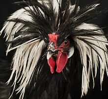 Ringo Rooster by Sara Horwood