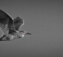 Catching The Red Eye Flight Home by Jeff Weymier