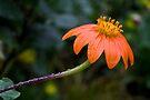 Wet and Orange by Adam Bykowski