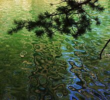 Green Water Patterns by Barbara  Brown