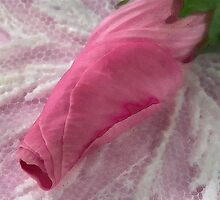 Lavatera Bud Macro - Digital Watercolor by Sandra Foster