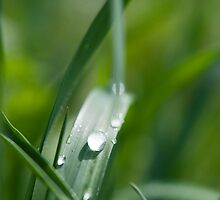 Morning dew on the grass by Jenella