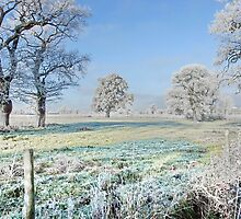 Trees in Hoar Frost by AnnDixon