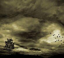 Return to Me by Scott Mitchell