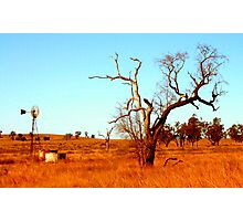 Shadow Puppet Country Tree Photographic Print