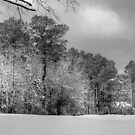 Snow In Myrtle Beach? by Kathy Baccari
