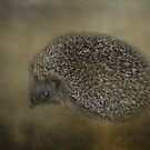 Hedgehog by Karen Martin IPA
