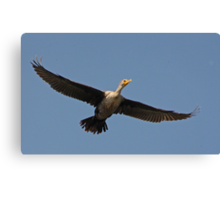 Flying Cormorant Canvas Print