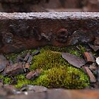 Rust & Moss by woodlandninja