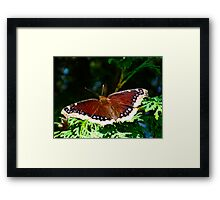 My nemesis with wings Framed Print