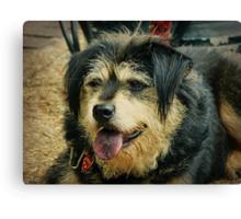 """Goodess"" the Shaggy Dog Canvas Print"
