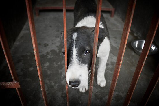 Kathmandu Animal Treatment Centre puppy by Mooke