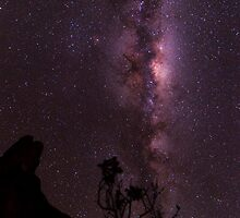 A bush flower sillhoetted against the stunning Milky Way by Rahi Varsani