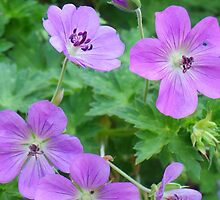 Purple Petals by Bob Hardy