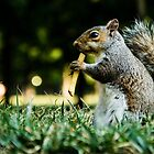Squirrel eats french-fries  by chrisfb1