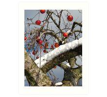 Bird Beaten Leftovers Hang on the Old Apple Tree Art Print