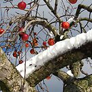 Bird Beaten Leftovers Hang on the Old Apple Tree by Mary-Elizabeth Kadlub