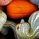 Fall Harvest by debidabble