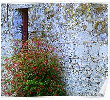 Stone Barn With Fuschia Poster
