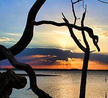Tree Root Framing by Carolyn  Fletcher