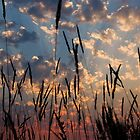 Sunset Through the Grasses by Don Schwartz