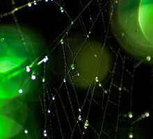 Glowing Spider Web by Don Schwartz