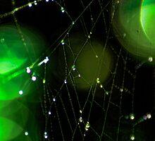 Glowing Spider Web by Don Schwartz