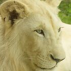 White Lion by tm-photography3