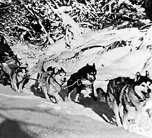 BW USA Alaska dog sled racing 1970s by blackwhitephoto