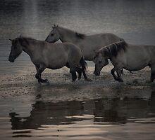 Through the Water by Henri Ton