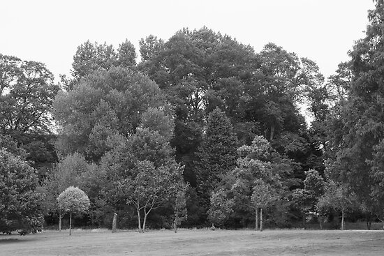 Trees at Bute Park, Cardiff - BW by Artberry