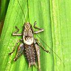 Grasshopper  ? by lynn carter