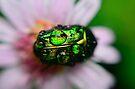 Green Metal Jacket by Kasia-D