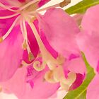 Fireweed Macro Digital Watercolor by Sandra Foster