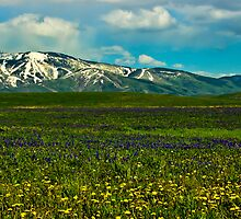 Wildflowers Touch the Mountains by Don Schwartz