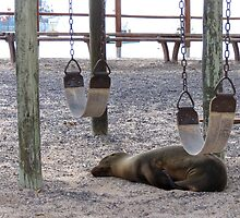 sea lion playing by Anne Scantlebury