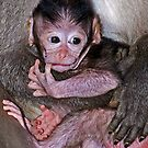 Baby Macaque by Henry Jager