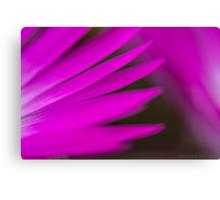 purple beauty Canvas Print