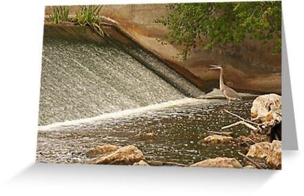 Great Blue Heron Waiting For Fish to Slide Down by Thomas Murphy