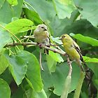 American Goldfinch Pair in Catalpa Tree by Ron Russell
