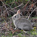 Baby Bunny by Kayleigh Walmsley