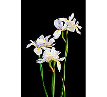 Dietes Flowers Photographic Print