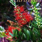 Merry Christmas Bottlebrush Card by Julia Harwood