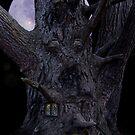 Enchanted Wood by Raymond Kerr