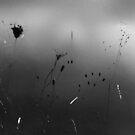 Minimal (01) by StefaniaC