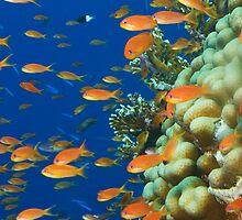 Reef Colours by Aziz T. Saltik