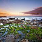 Frozen in Time - Curio Bay, South Island, New Zealand by Matthew Kocin